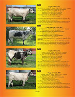 Page 12 of the Hill Country Classic sale catalogue