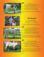 Page 13 of the Hill Country Classic sale catalogue