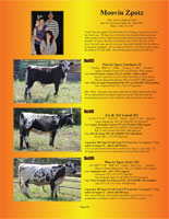 Page 14 of the Hill Country Classic sale catalogue