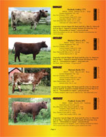 Page 4 of the Hill Country Classic sale catalogue