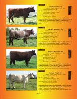 Page 5 of the Hill Country Classic sale catalogue