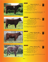 Page 6 of the Hill Country Classic sale catalogue