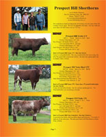 Page 7 of the Hill Country Classic sale catalogue