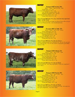 Page 8 of the Hill Country Classic sale catalogue
