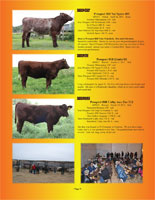 Page 9 of the Hill Country Classic sale catalogue